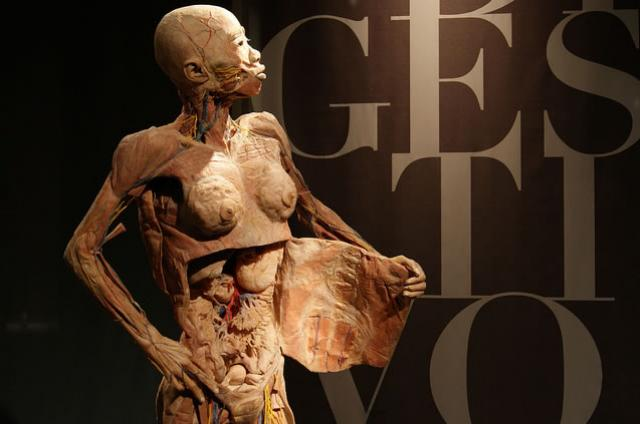 Exposição 'O Fantástico Corpo Humano' volta a São Paulo