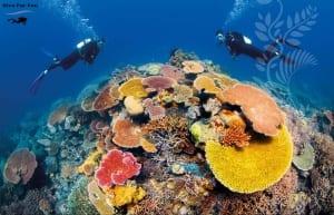 diveforfun barrier reef