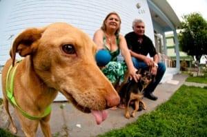 11-10-2011-18-11-46-valdete-e-claudio-cachorro-adotado-fernando-mendes-28-28-
