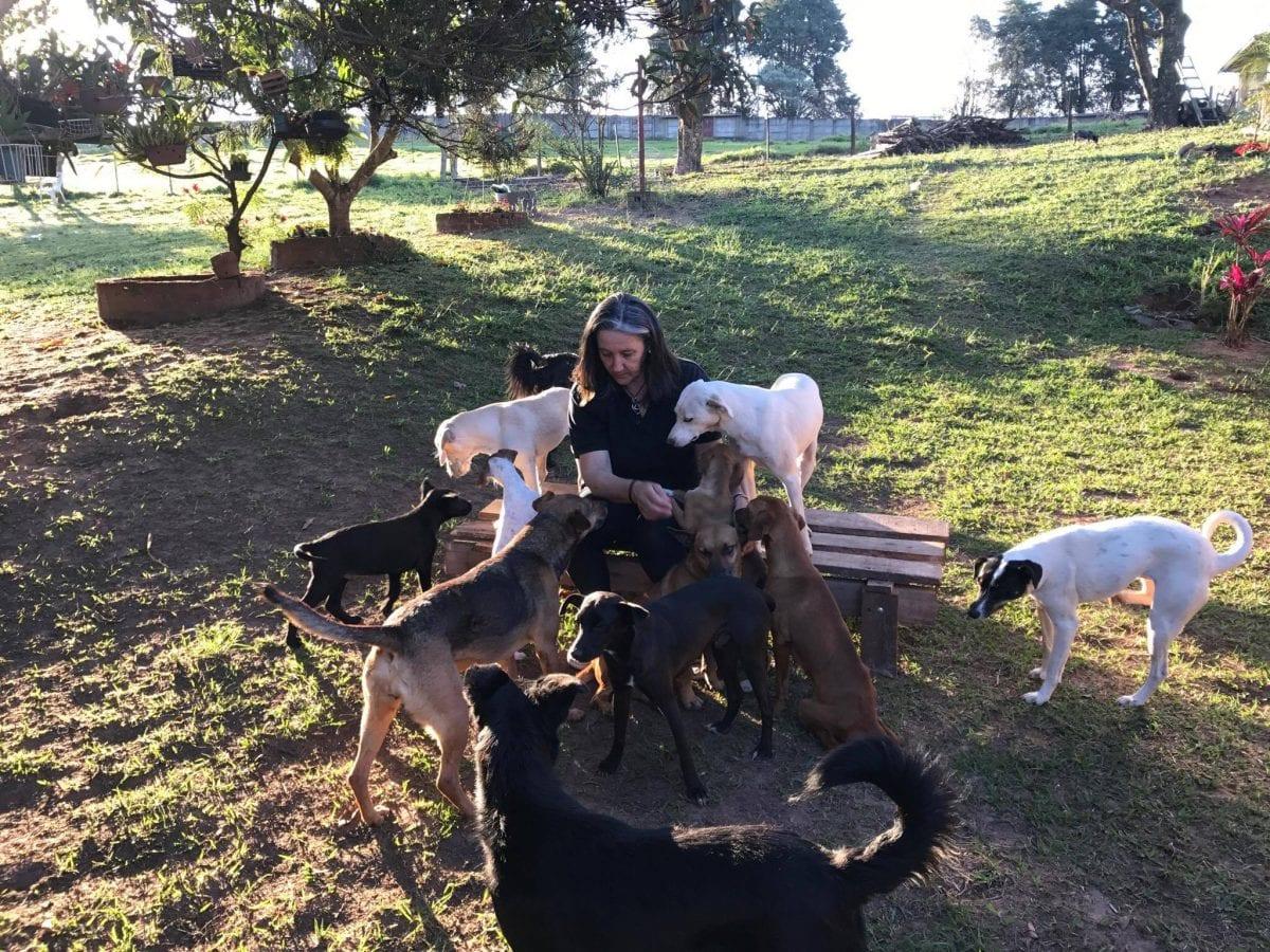 Amor de Quatro Patas – a ONG que propõe um novo método para adoção de animais