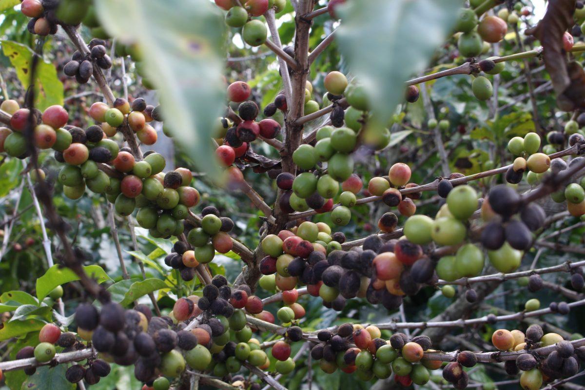 Agrotóxicos: uso indiscriminado alerta pesquisadores