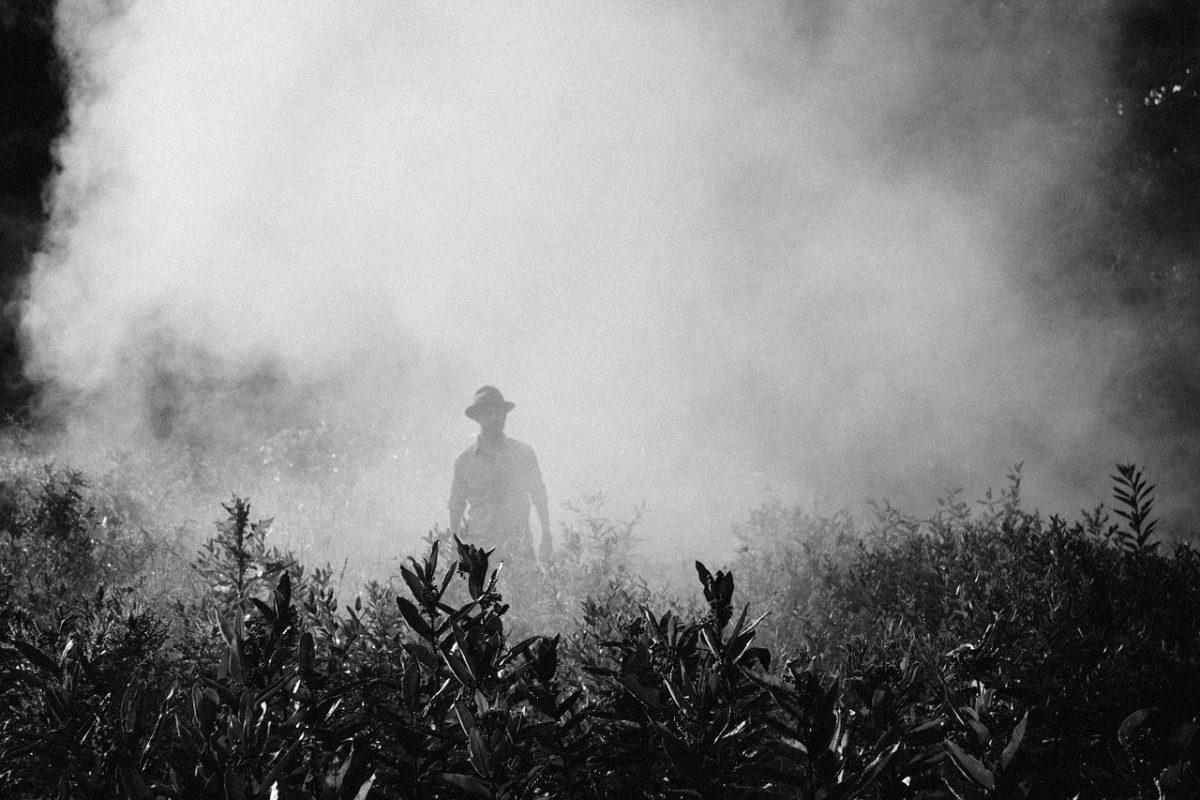 Reforma Agrária e Agrotóxicos