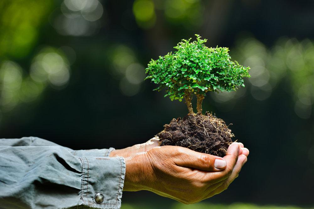 Dia Mundial do Meio Ambiente: um olhar em suas raízes