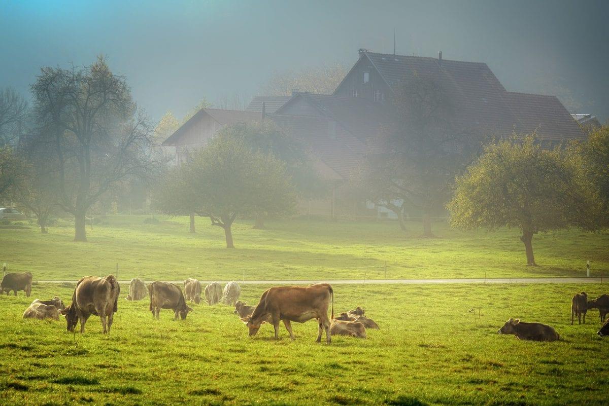 Os impactos ambientais da pecuária