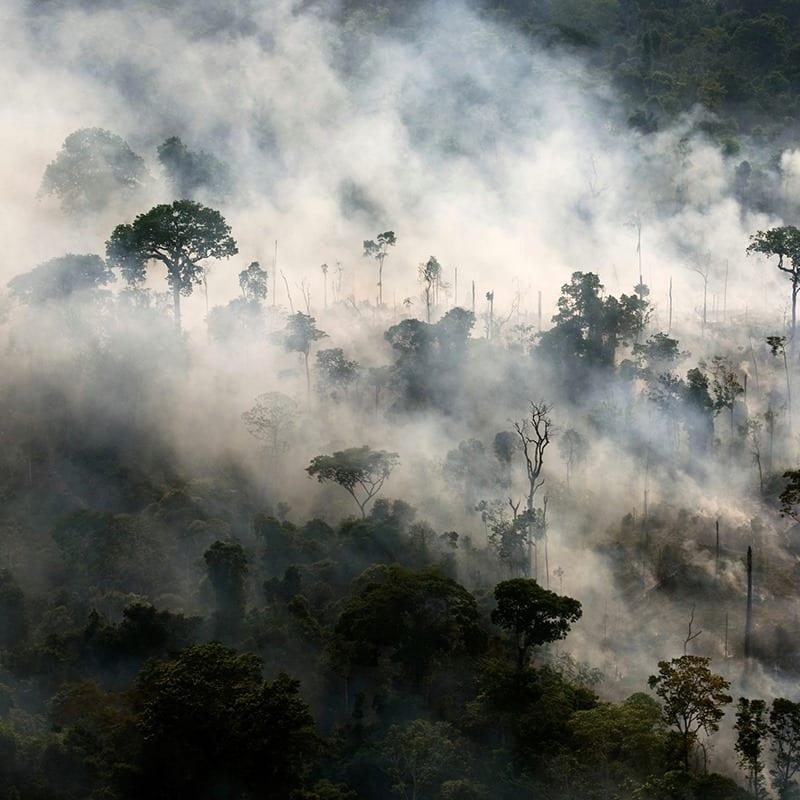 18 marcas, incluindo Vans e Timberland, suspendem a compra de couro do Brasil