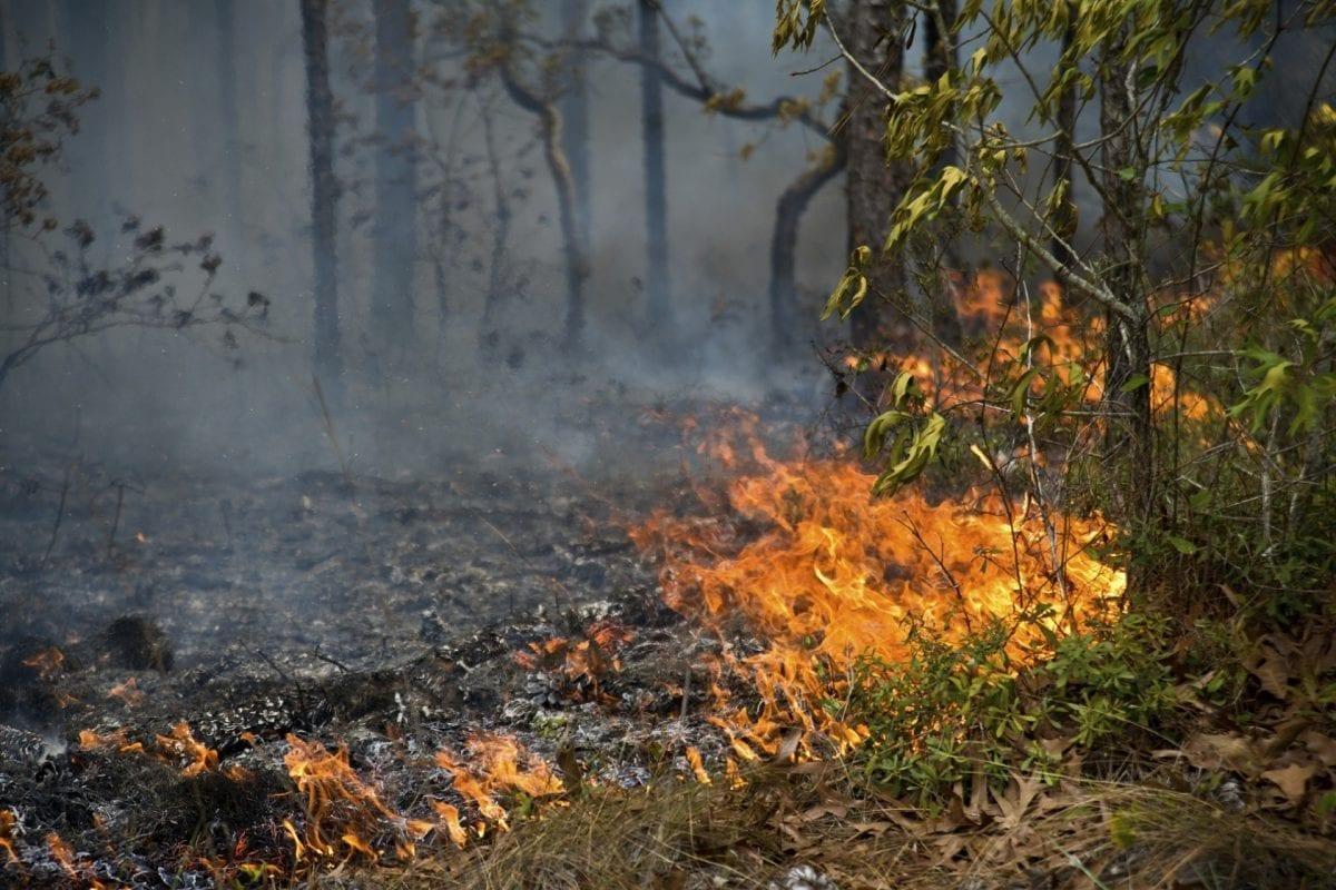 Desmatamento da Amazônia: Após Bolsonaro, queimadas aumentam em 82%