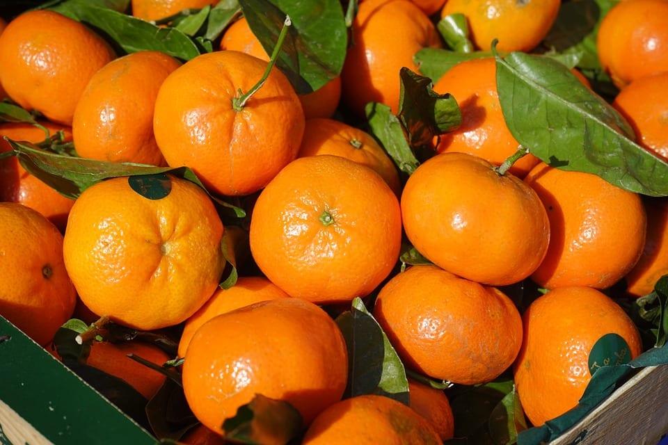 Citrus aurantium emagrece?