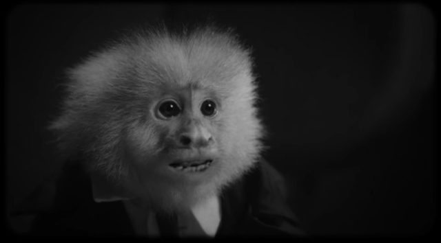 David Lynch interroga um macaco em curta surpreendente
