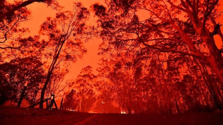 Incêndios na Austrália: veja os famosos que se mobilizaram