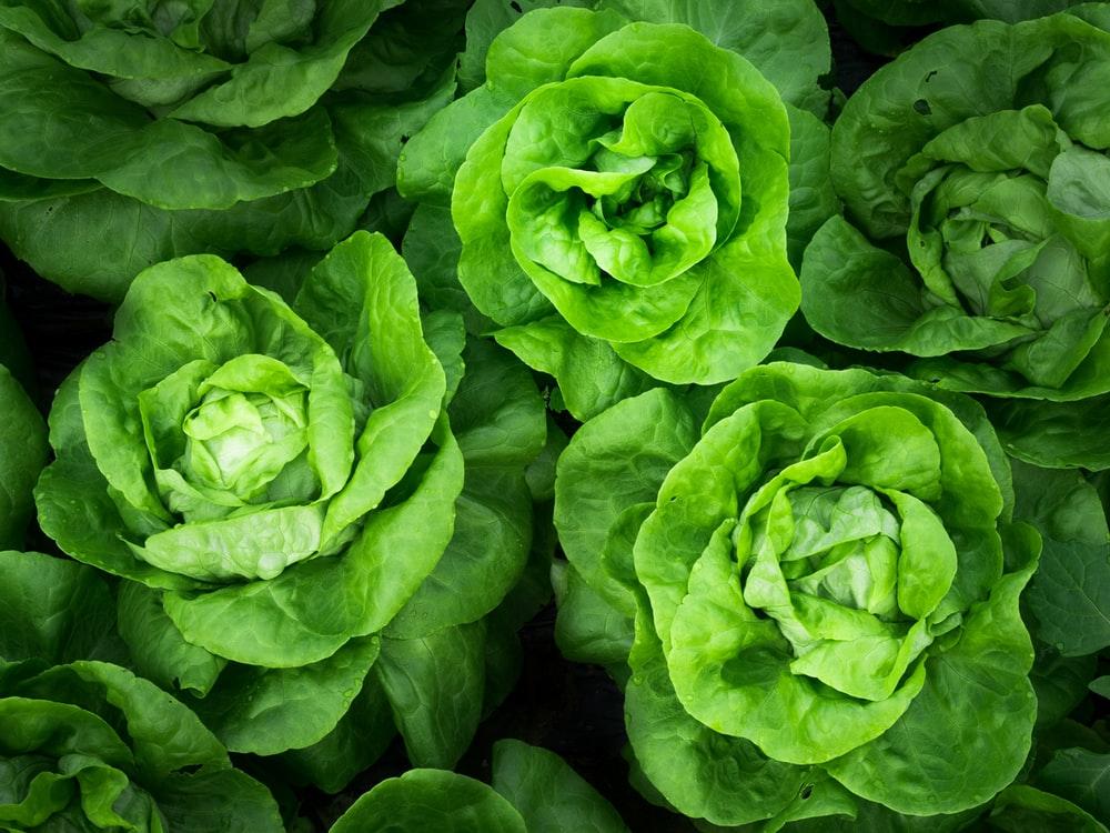 Saladas: uma boa alternativa para quem quer emagrecer!
