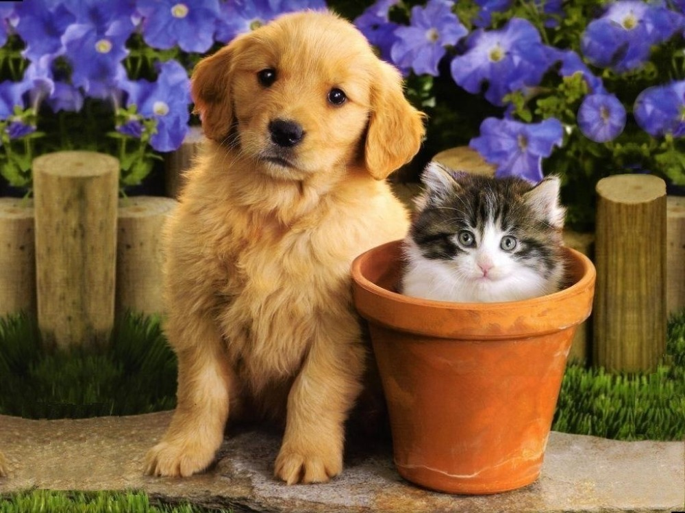 Coronavírus: Cães e gatos não transmitem o vírus