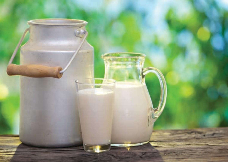 Confira as diferenças entre os diversos tipos de leite