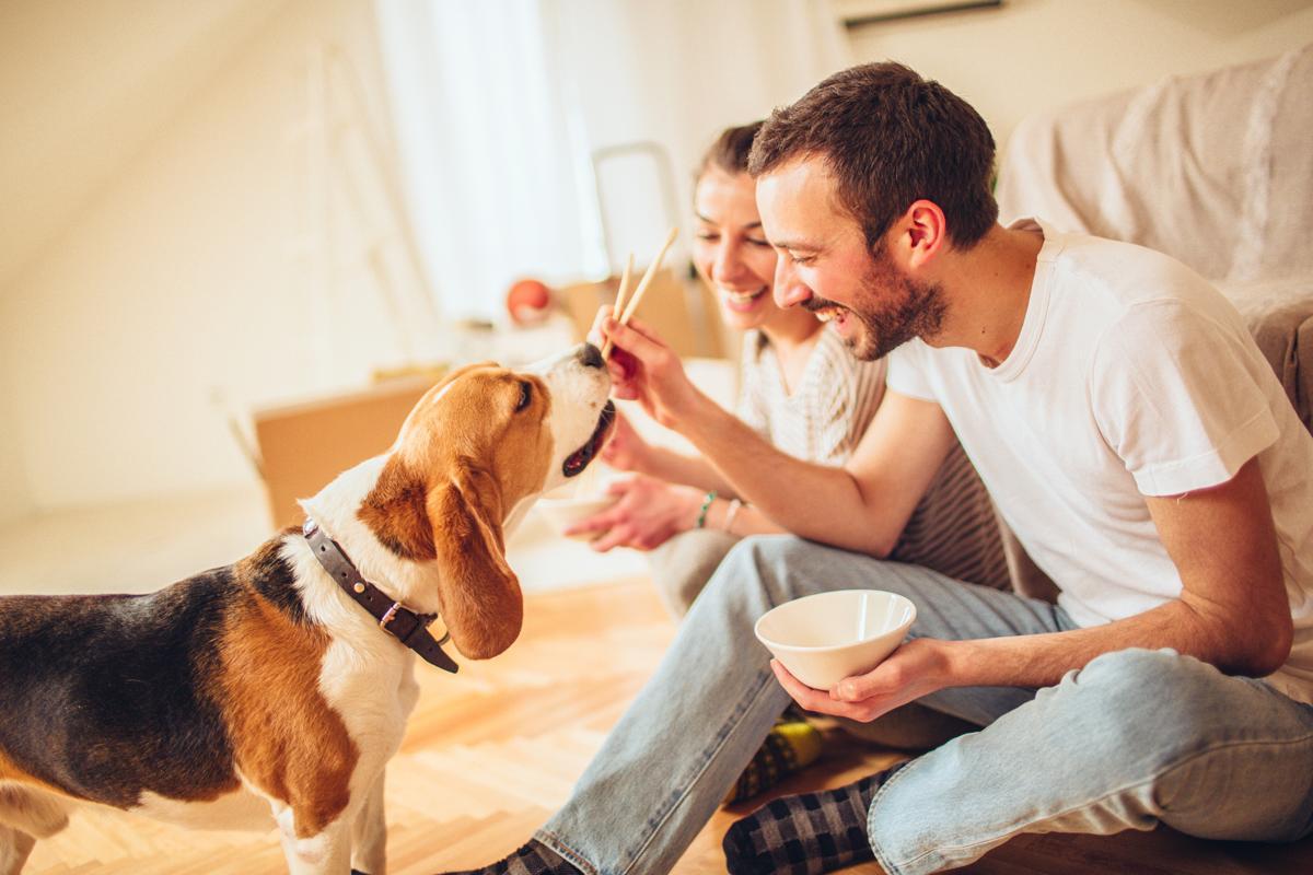 Como se divertir com seu pet durante a quarentena