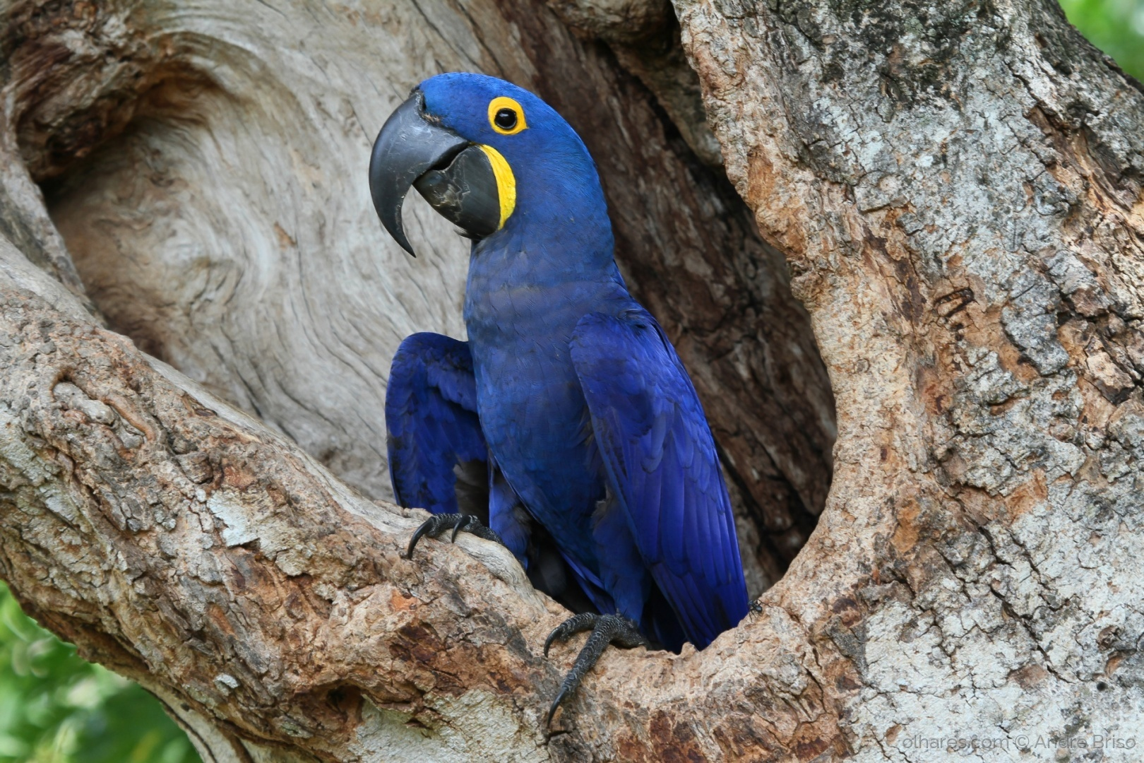 Animais extintos no Brasil