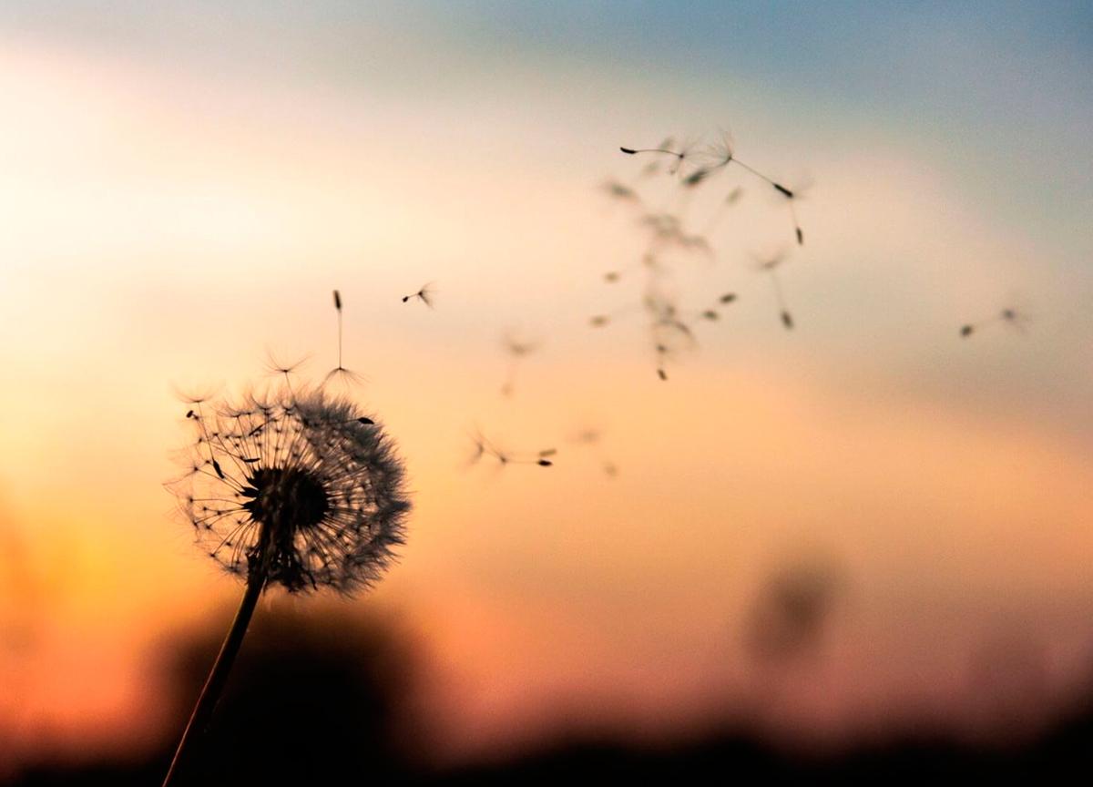 Crônica – Sobre aproveitar as pequenas coisas