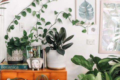 benefícios das plantas