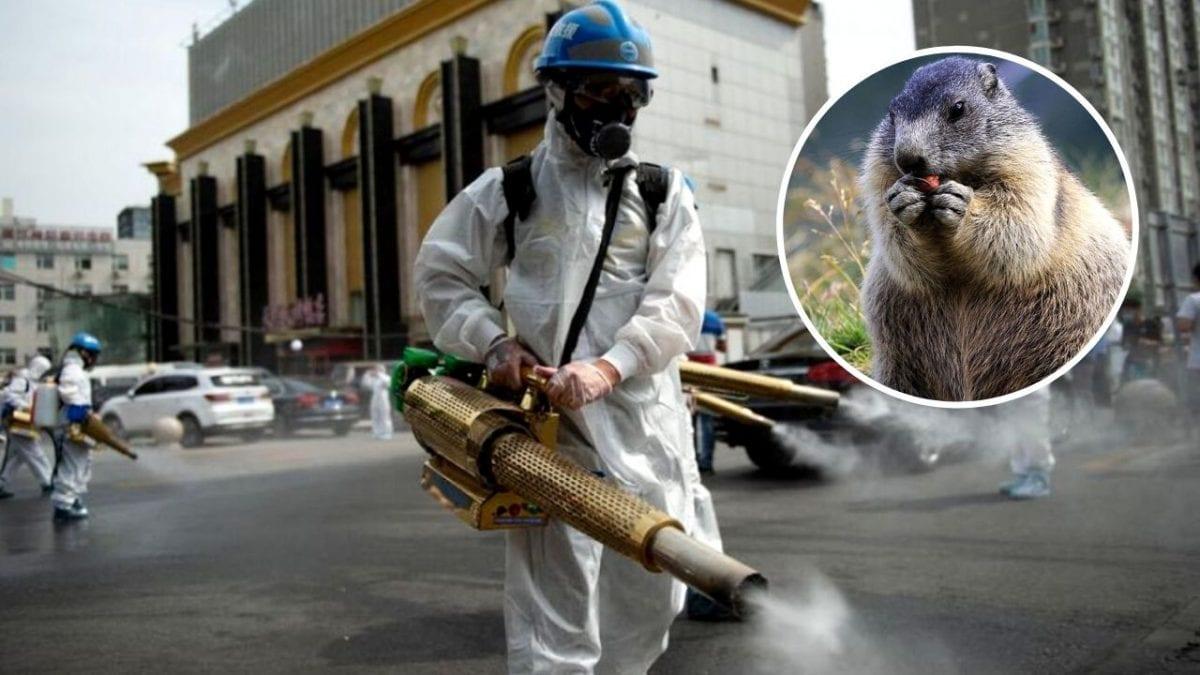 Entenda tudo sobre os recentes casos de peste bubônica