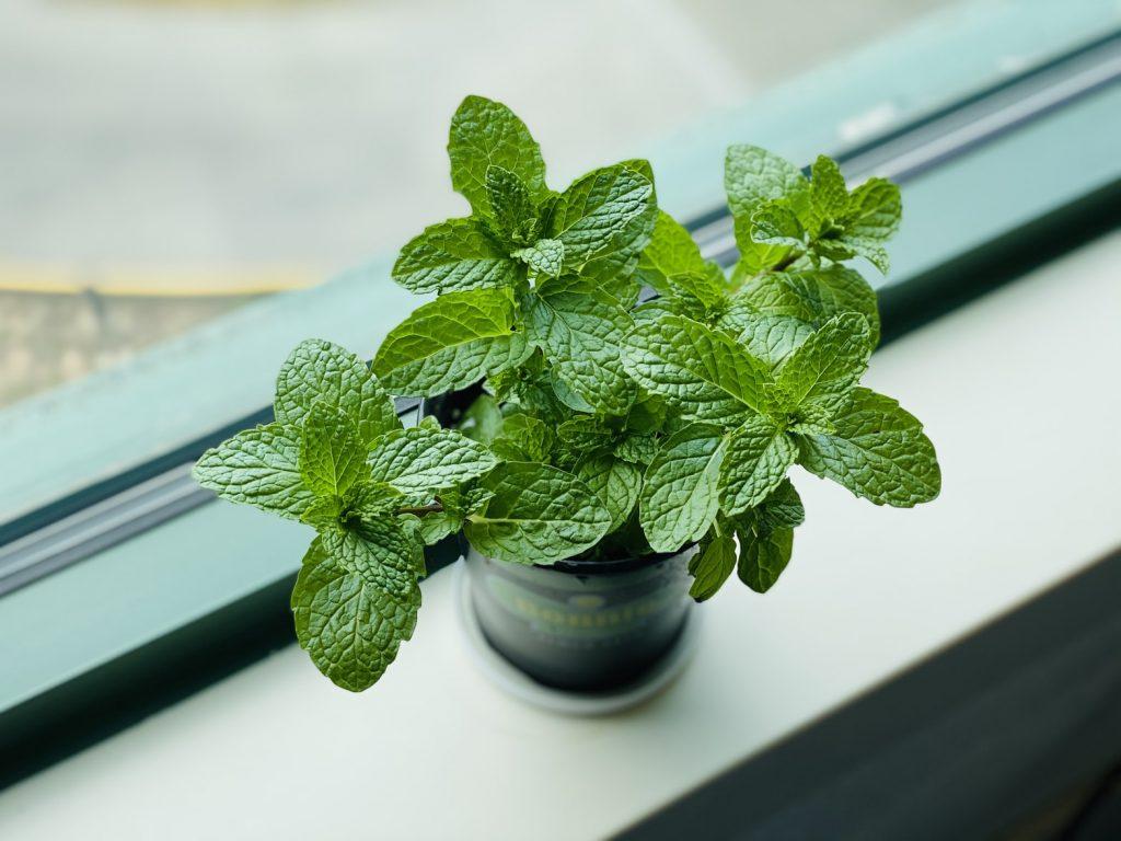 Horta em casa: saiba o que cultivar