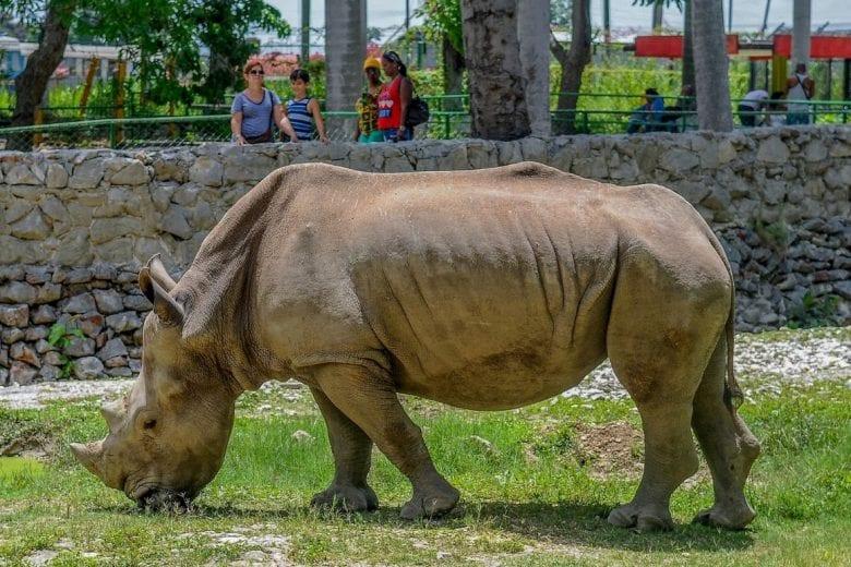 animais de zoológico