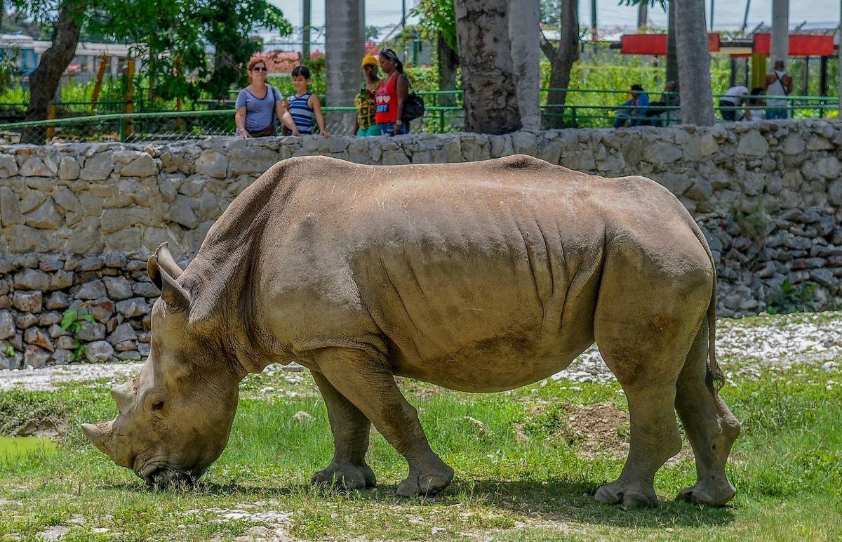 Saiba a situação dos animais de zoológico durante a pandemia