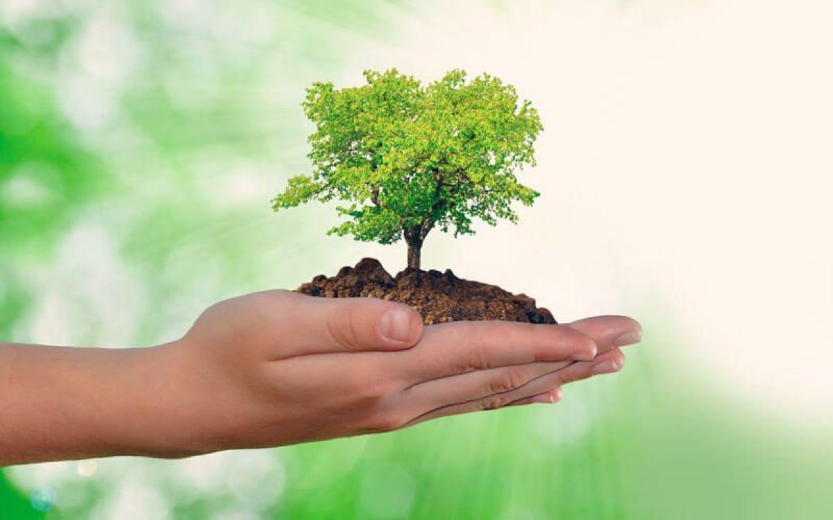Como o meio ambiente reagiu à quarentena e quais são as previsões