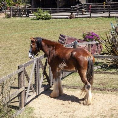 a fazenda 12 cabra mc mirella