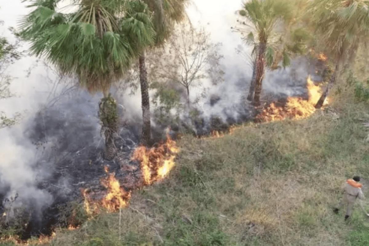 Pantanal: Entenda a causa das queimadas e a importância do bioma