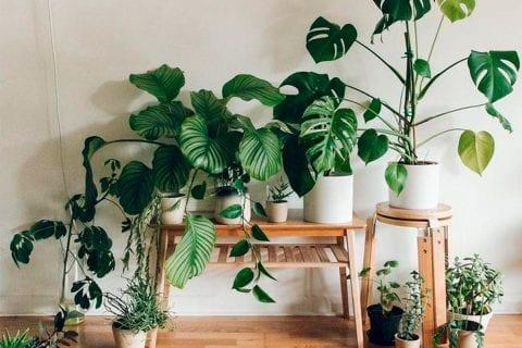 jardim no apartamento