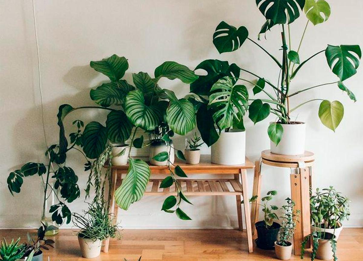 Veja como ter um jardim dentro de seu apartamento