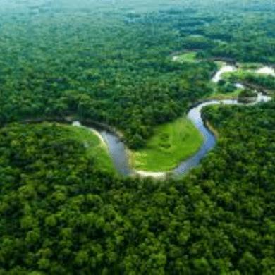 Amazônia importância