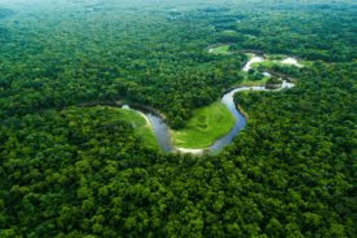 Amazônia, por que a região é tão cobiçada por outros países?