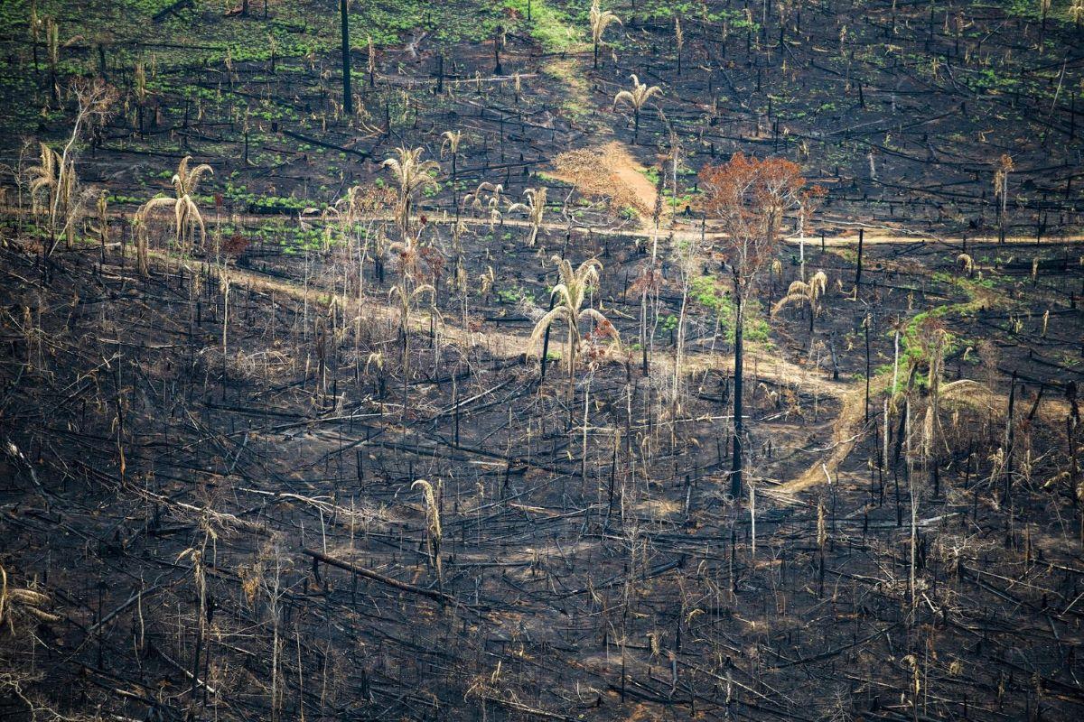 Queimadas na Amazônia: entenda o posicionamento do governo