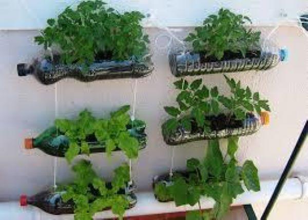 plantas para hortas