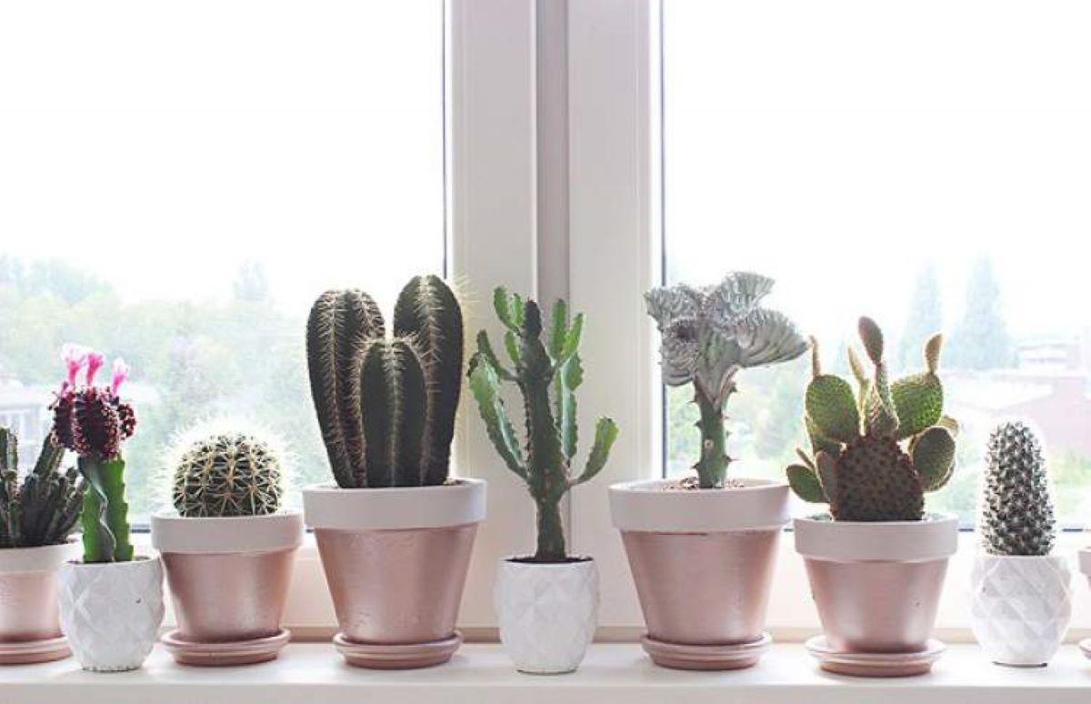 Plantas para serem cultivadas e como elas afetam o ambiente e a saúde