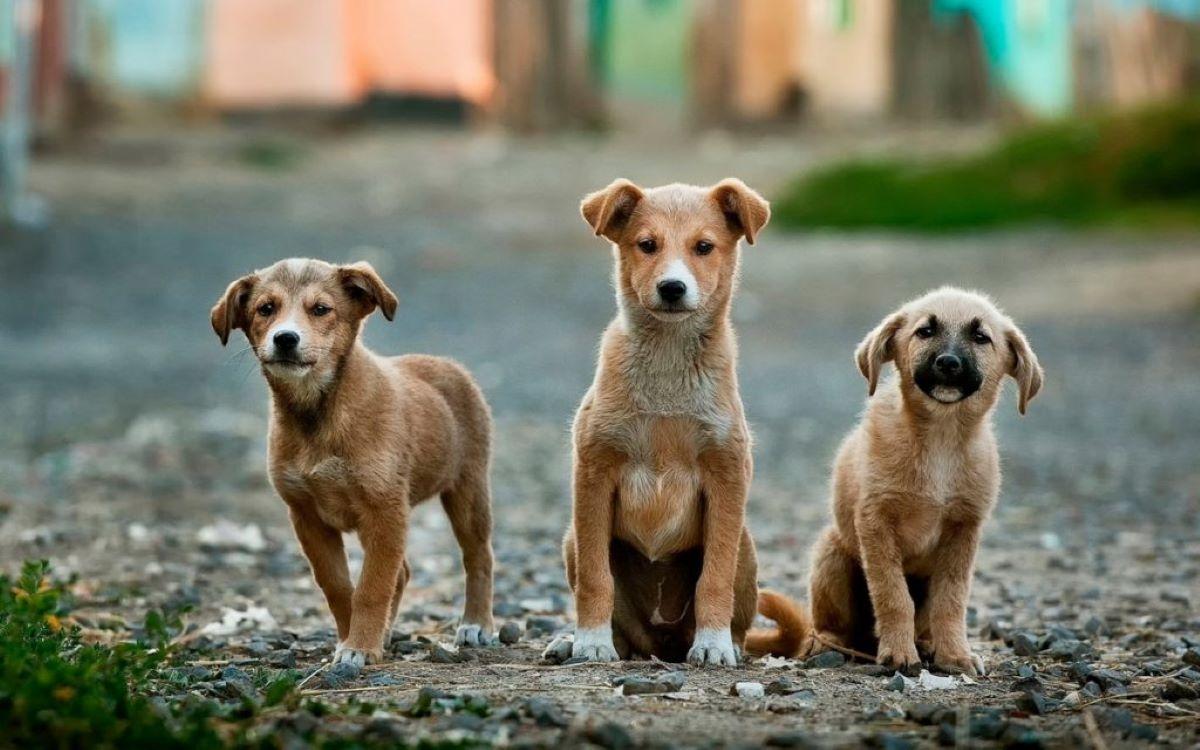 Quais as maiores ONGs de proteção animal?
