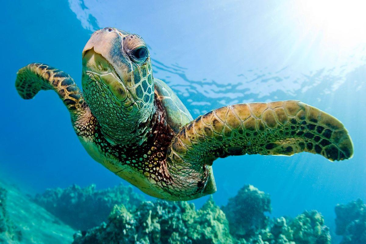 Saiba como ajudar a proteger os animais marinhos