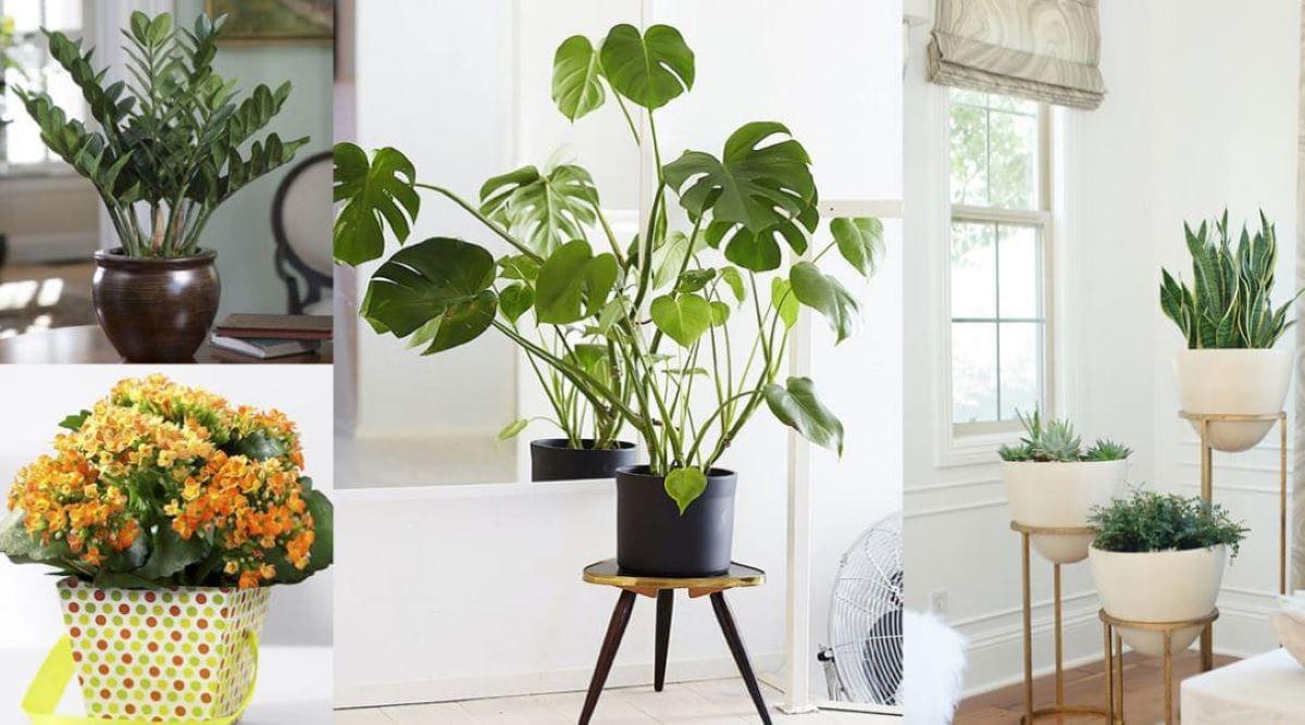 Quais plantas devem ser escolhidas para a decoração interna?