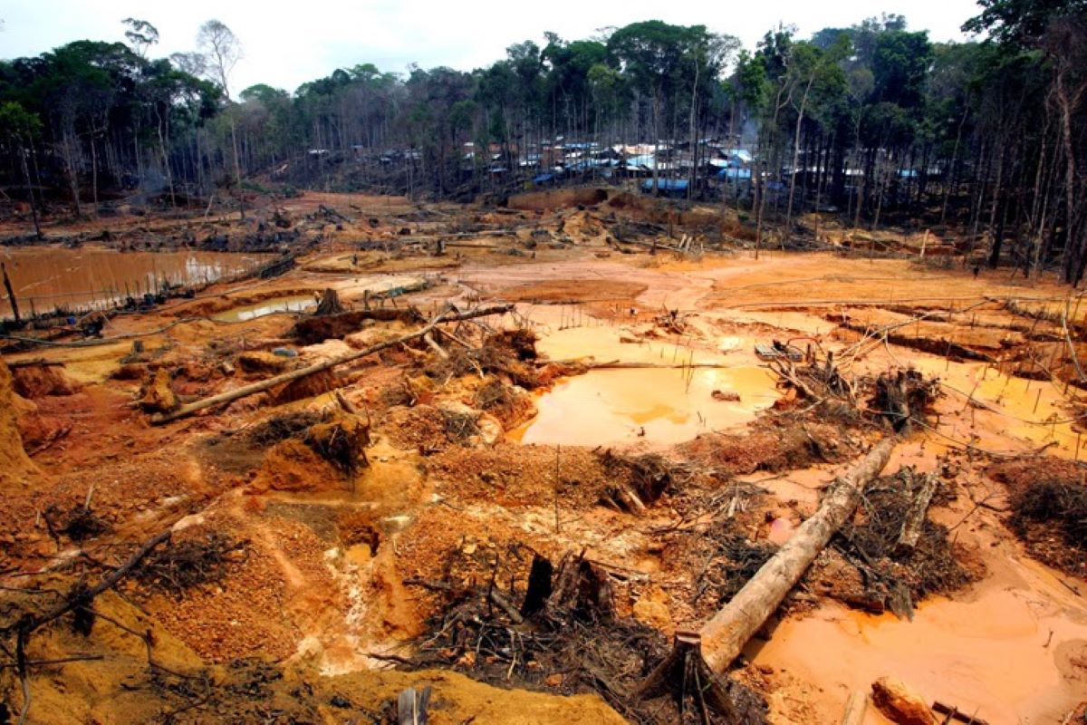 Entenda tudo sobre o aumento no desmatamento da Amazônia