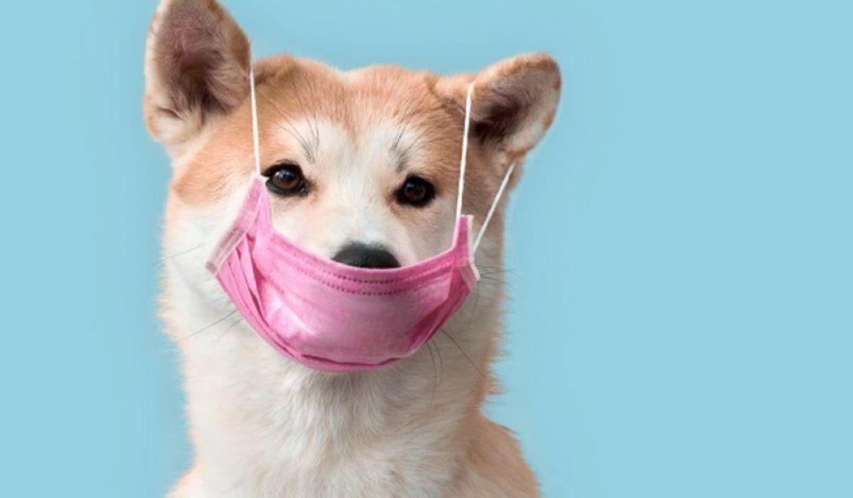 Pets e pandemia: efeitos da quarentena para os animais de estimação