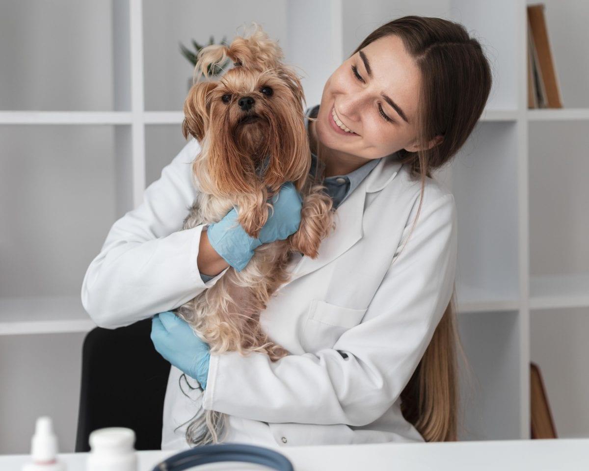 Medicina veterinária: o que você precisa saber antes de iniciar o curso