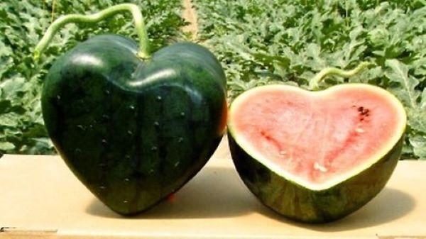 melancia do japão