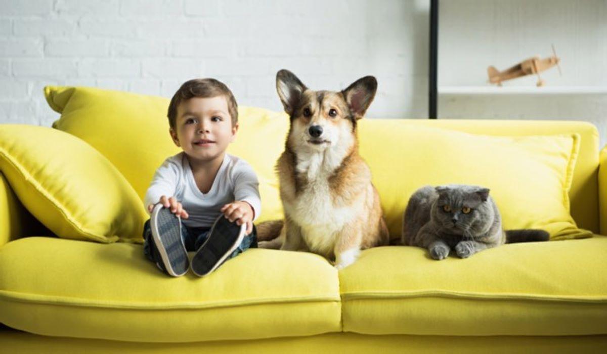 Como saber se você está pronto para ter um animal de estimação?