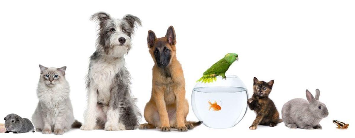 adotar um animal