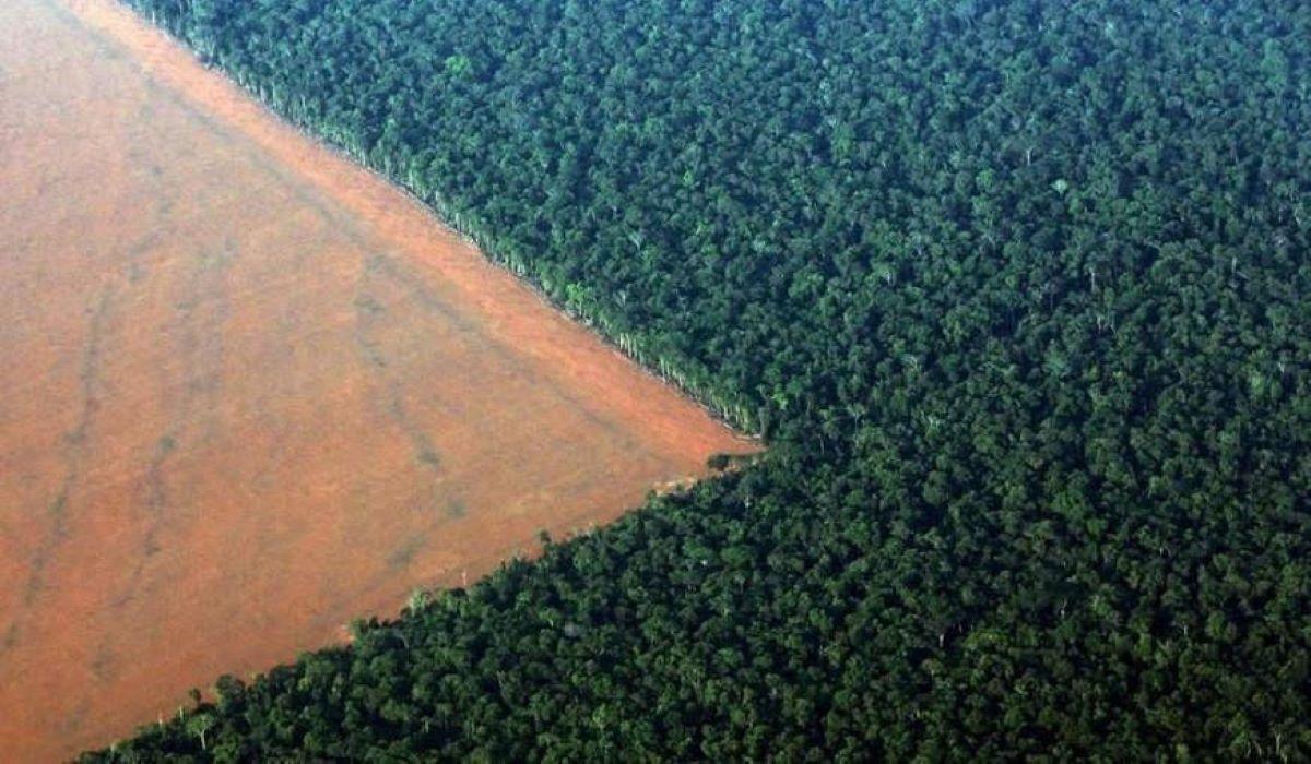 Opinião: A importância da preservação do meio ambiente no Brasil
