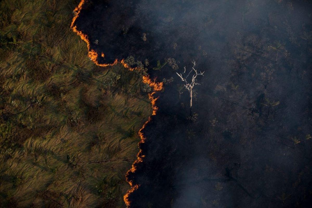 Opinião: descaso com o ambiente afeta relações internacionais brasileiras
