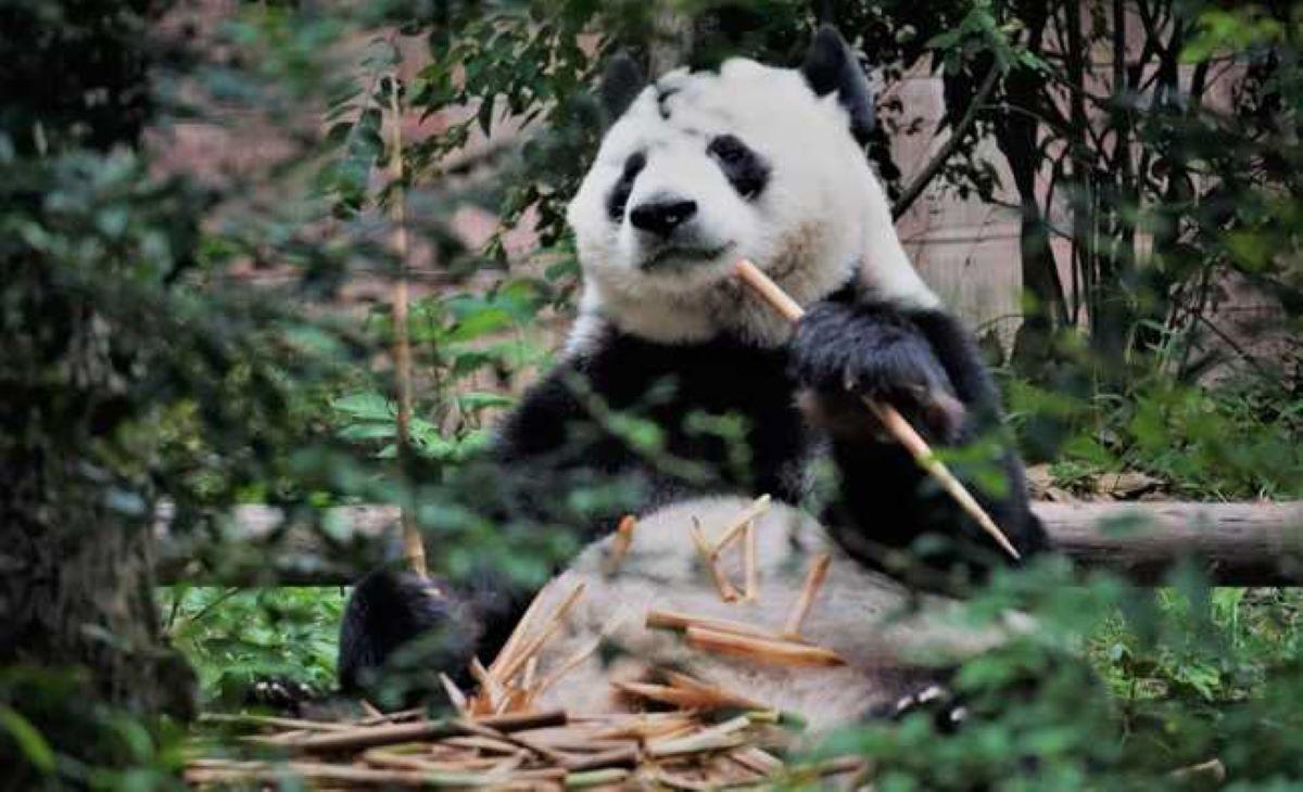 Confira cinco animais que estão em extinção