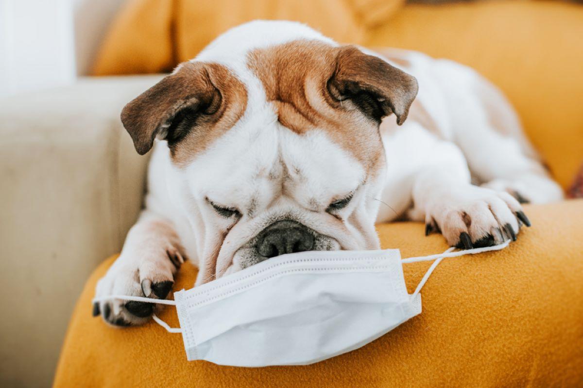 Quarentena pode afetar o comportamento de cachorros