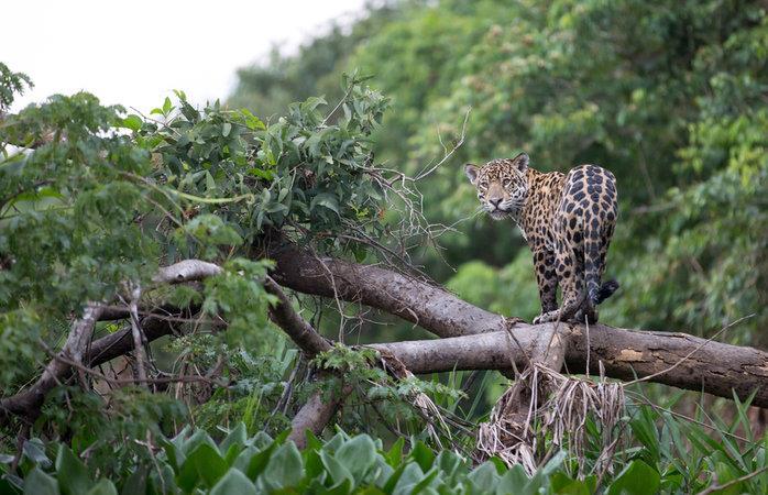 pantanal reservas naturais
