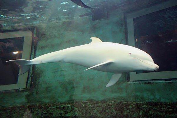 animais marinhos em cativeiro