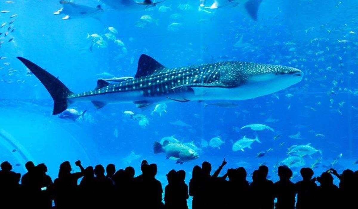 Entenda como a vida em aquários prejudica animais marinhos